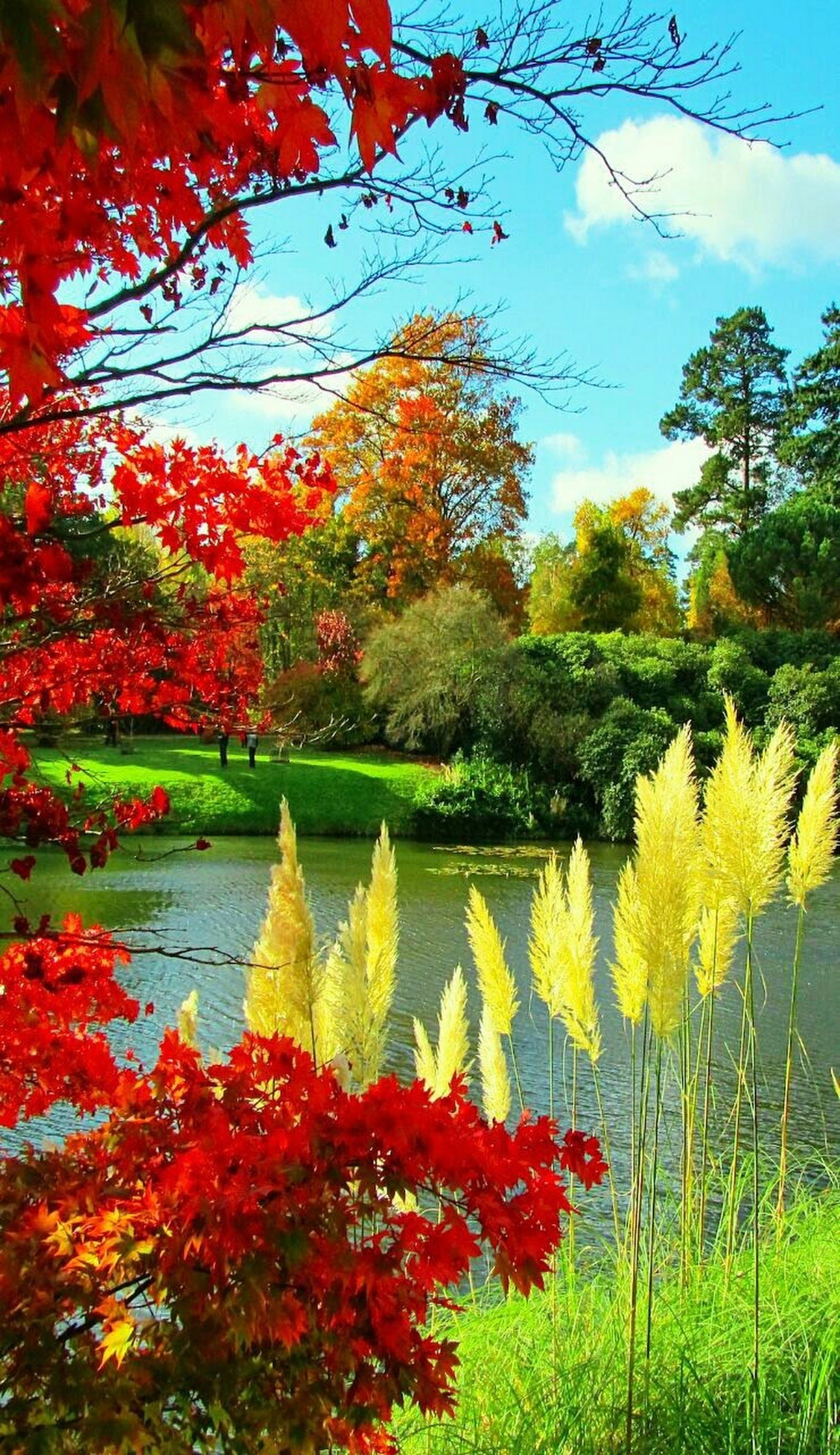 Such A Beautiful Scene C Nature Photography Flowers Nature Photography Beautiful Landscapes