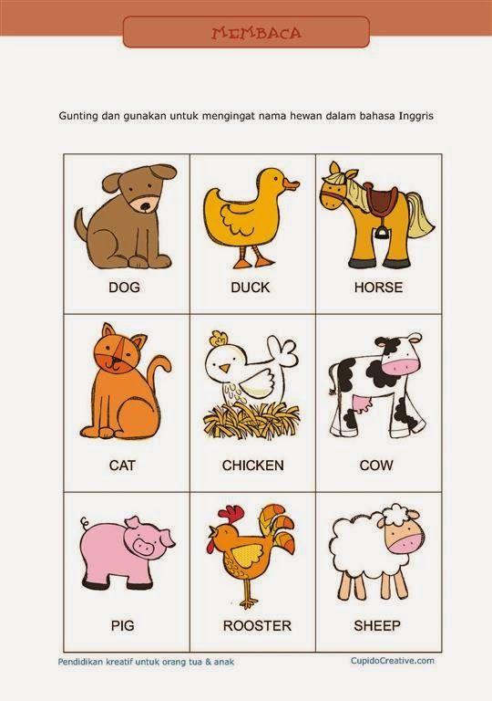Gambar Binatang Dalam Bahasa Inggris