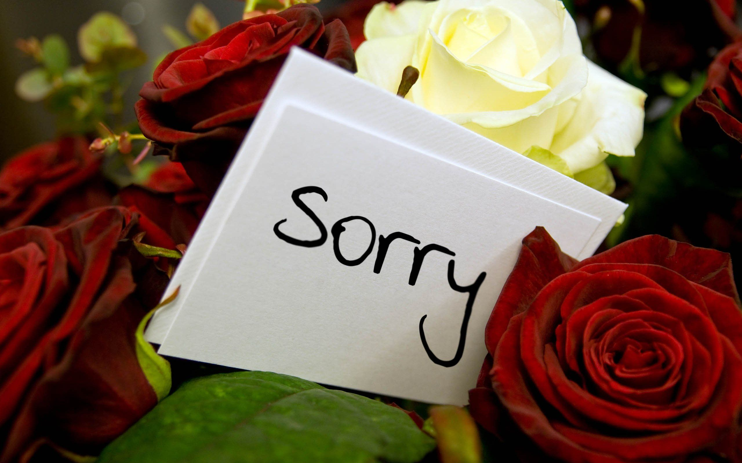 Sorry Hd Pics wallpaper hd