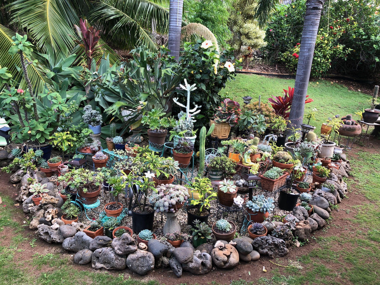 Pin by Xeegirl on Maui Girl....Pukalani Plants, Garden, Maui