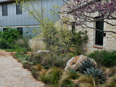 The Iconic Combination Of Harvard Agave And Mexican Feather Grass Is Prevalent Throughout Th Xeriscape Landscaping Texas Landscaping Backyard Texas Landscaping