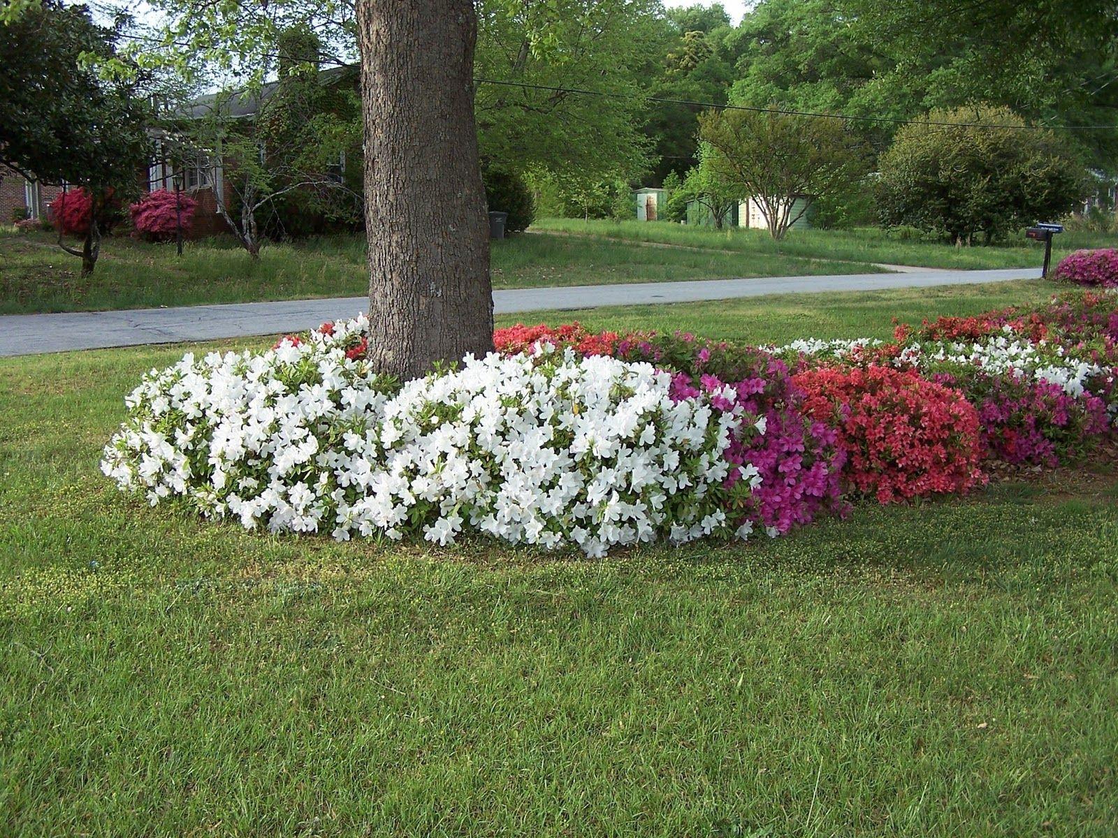 flowers in base of trees-flowers