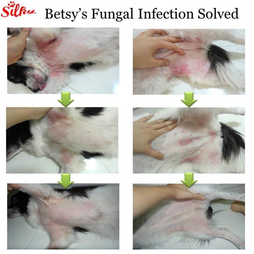 Dog Skin Yeast Infection How To Treat Dog Skin Yeast Infection