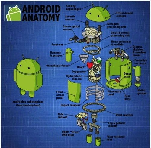 Android \'s #structure! Android #Anatomy | Android Apps | Pinterest ...