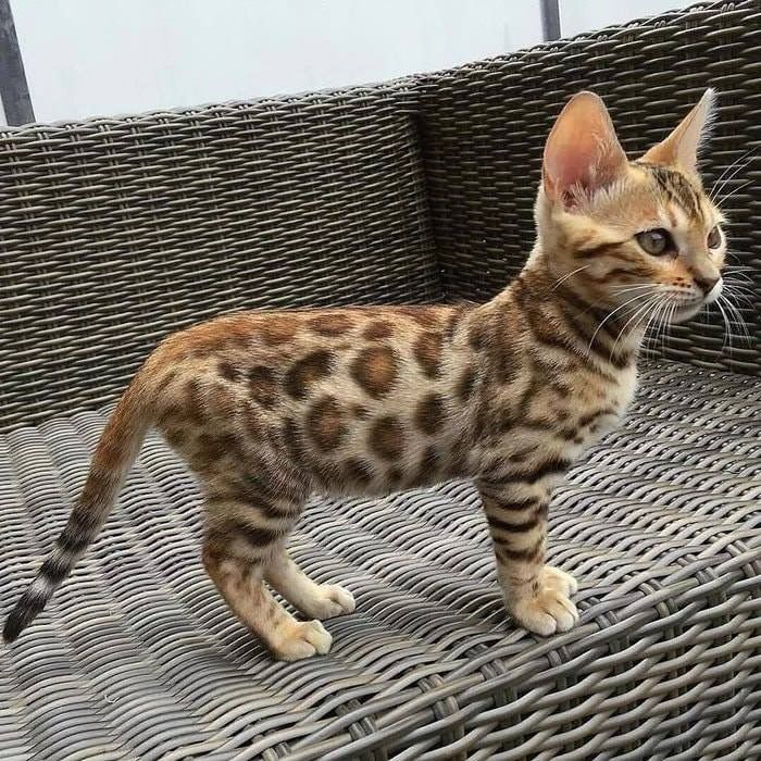 Pin by मृगेन्द्र भानु on Animaux Kittens cutest, Cats