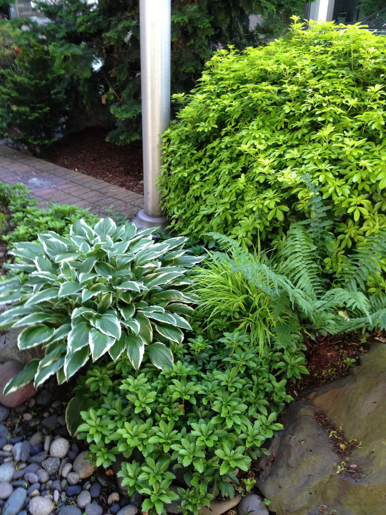 Northwest Plant Combinations I Like Mexican Orange Hosta Fern Japanese Spurge And A Little Japanese Forest Grass Peeking T Plants Plant Combinations Hostas