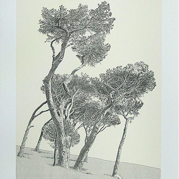 Pine Trees, De Waal Drive by #antonkannemeyer. Sold by @bennettcontemporary