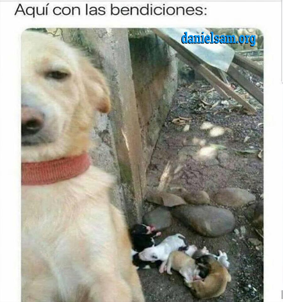 Aqui Y Tu Memes Divertidos Humor Divertido Sobre Animales Memes Estupidos
