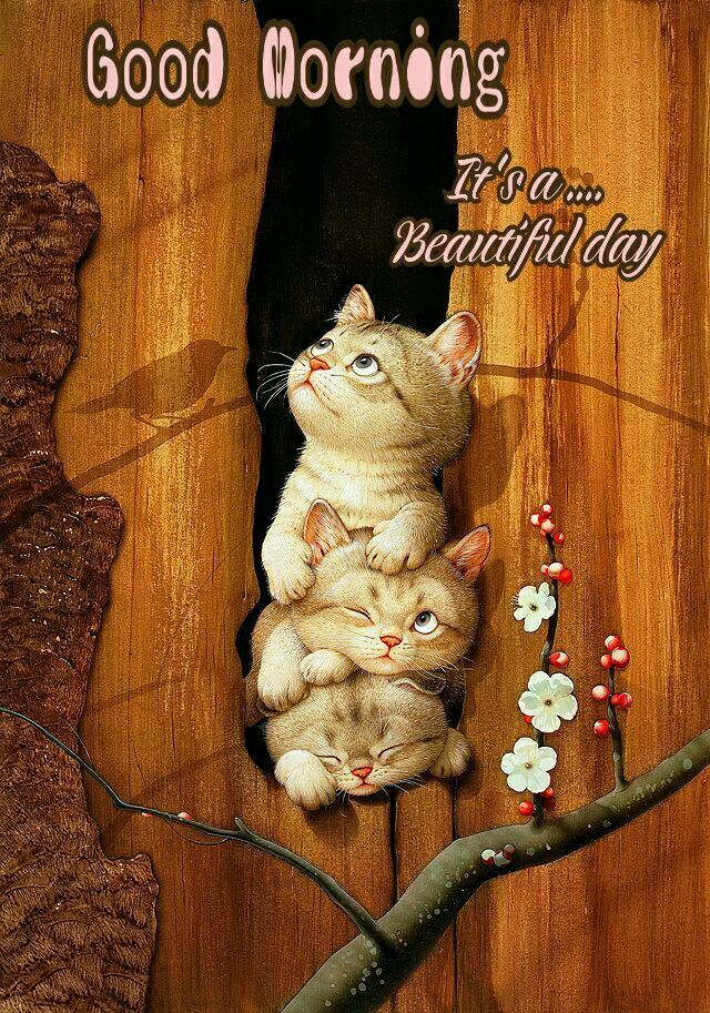 Good Morning It Is A Beautiful Day Cute Good Morning Funny Good Morning Images Good Morning Cards