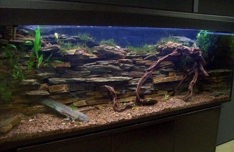 Resultado de imagen para montaje acuario para ciclidos - Montaje de acuarios ...