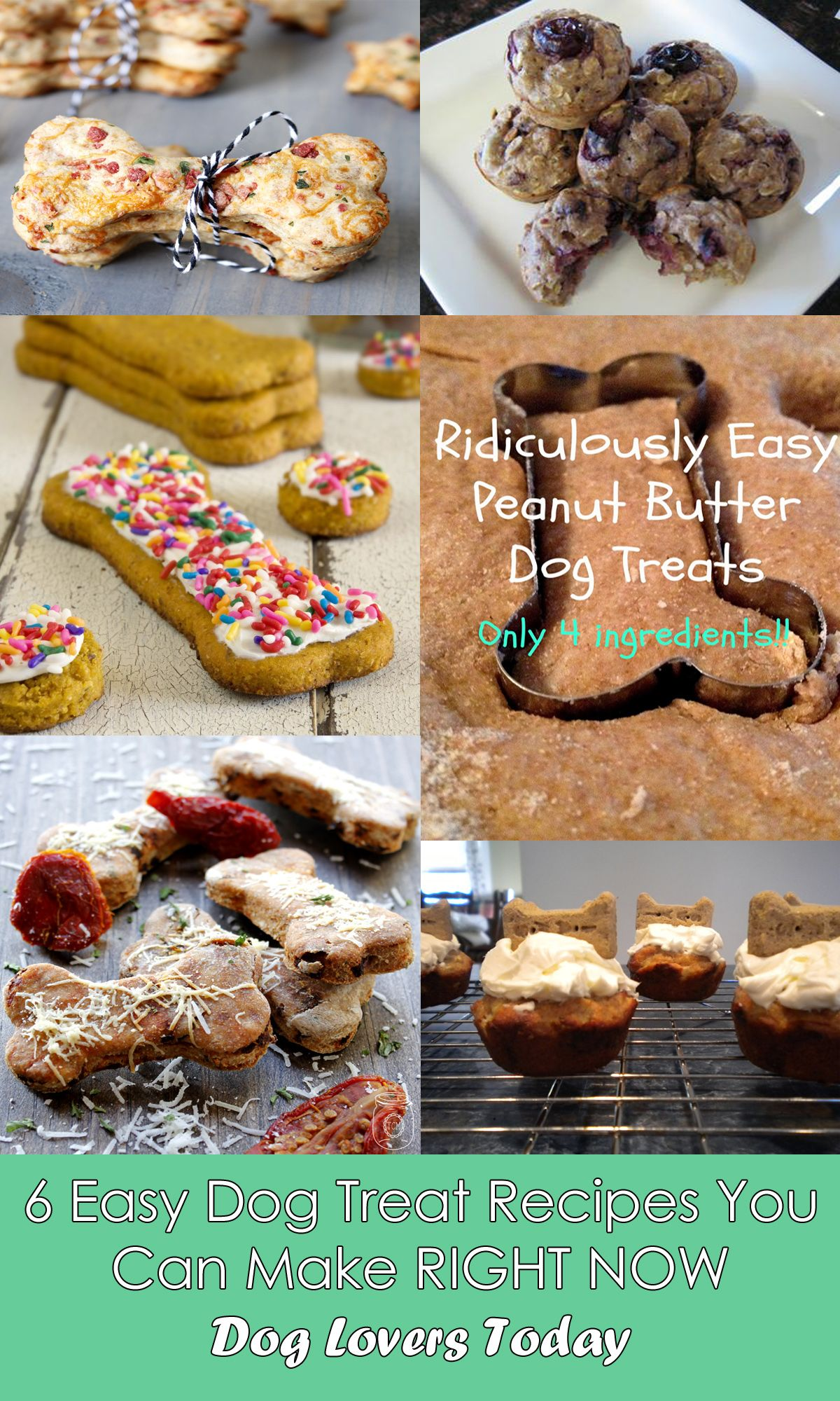 Six Easy Dog Teat Recipes You Can Make RIGHT NOW | Dog Lovers Today