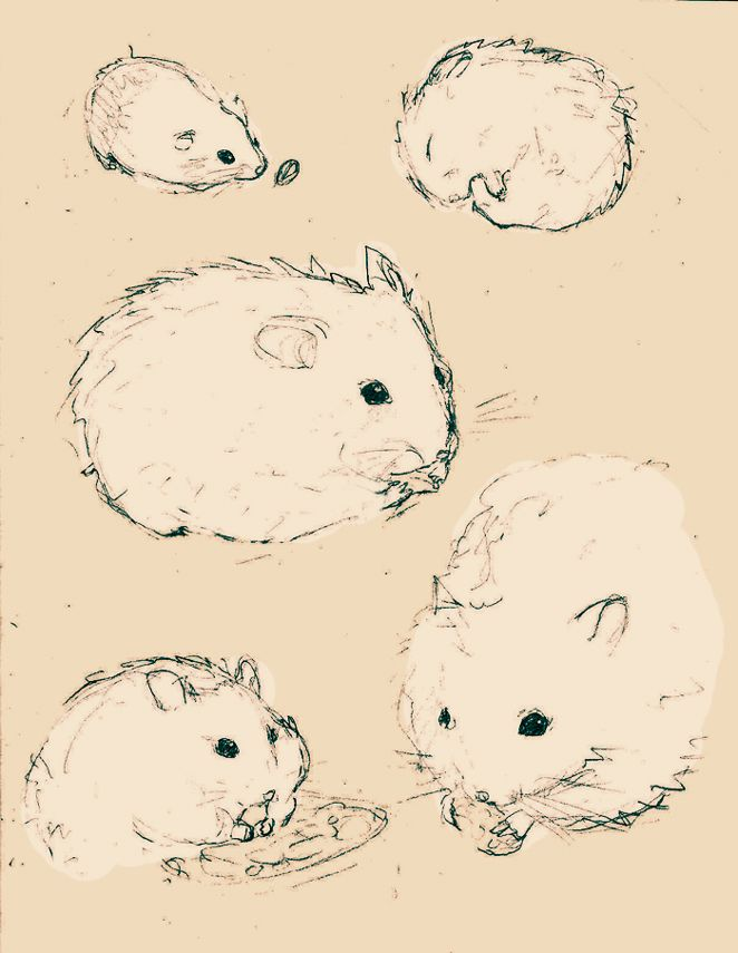 some doodles of hamsters by 0xo on deviantart illustrations