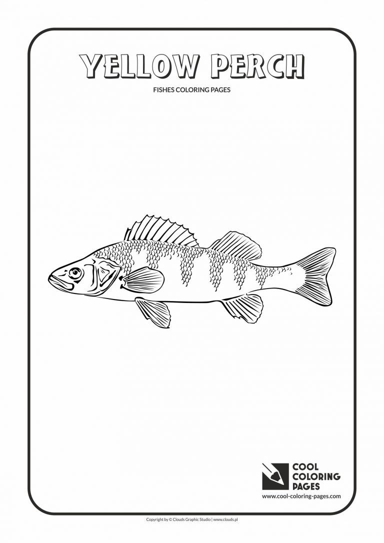 Yellow Perch Fish Coloring Pages Free Download Dengan Gambar