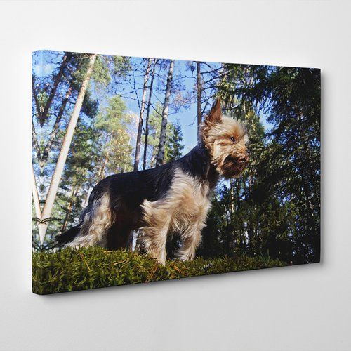 Yorkshire Terrier Dog Forest Photographic Print On Canvas Big Box Art Size 50cm H X 76cm W Yorkshire Terrier Dog Box Art Art