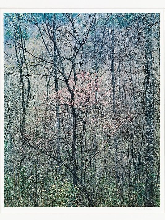 Eliot Porter...my favorite photographer and Redbud Trees in Bottom Land, my favorite print. It's Spring!