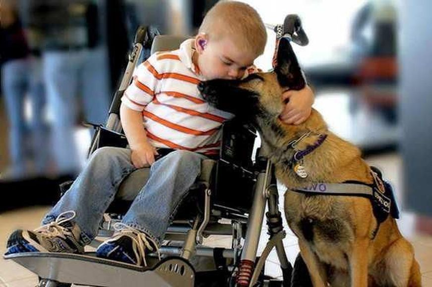 a dog and his best friend Tumblr Animals, Dog love, Dogs