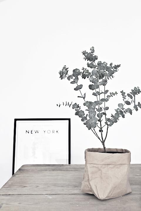 Eukalyptus forever love things i love pinterest for Deko topfpflanzen