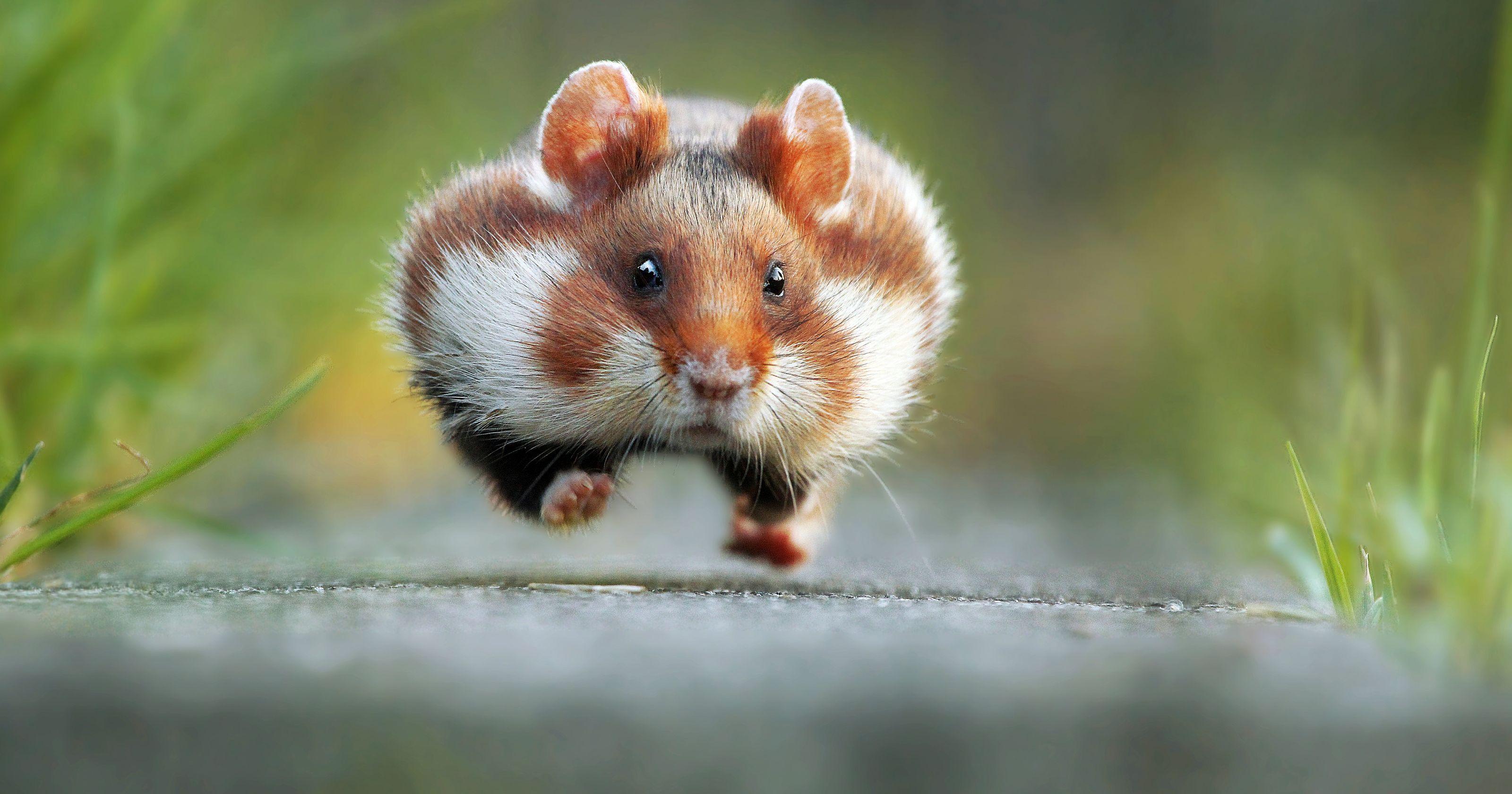 'Comedy' wildlife photos are a hoot
