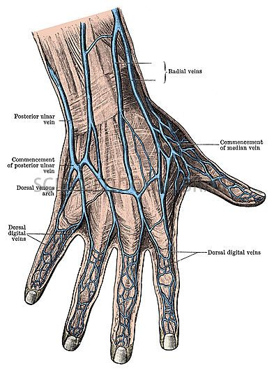 Ring finger vein goes to heart