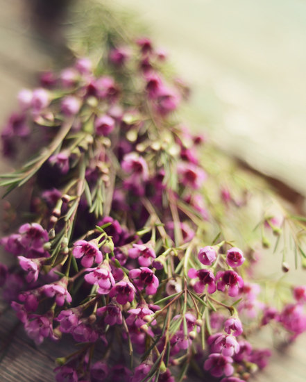 Flower Photography Purple Flowers Wax Gold Romantic Art Rustic Decor Summer Fine Photo Green Botanical Floral Wall