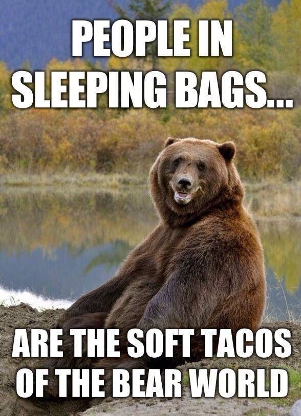 Soft tacos in the bear world