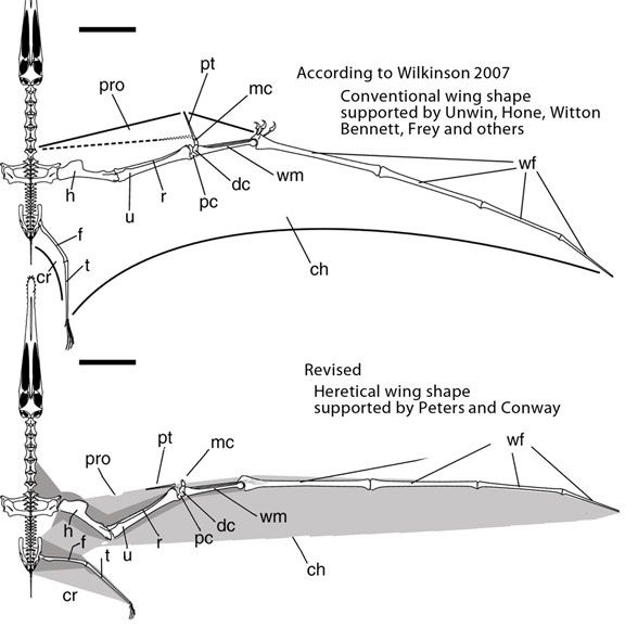 Pterodactyl Wing Google Search Wings Ancient Pterodactyl