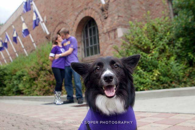 Engagement shoot with dog | Amelia Soper Wedding Photographer, University of Washington, corgie