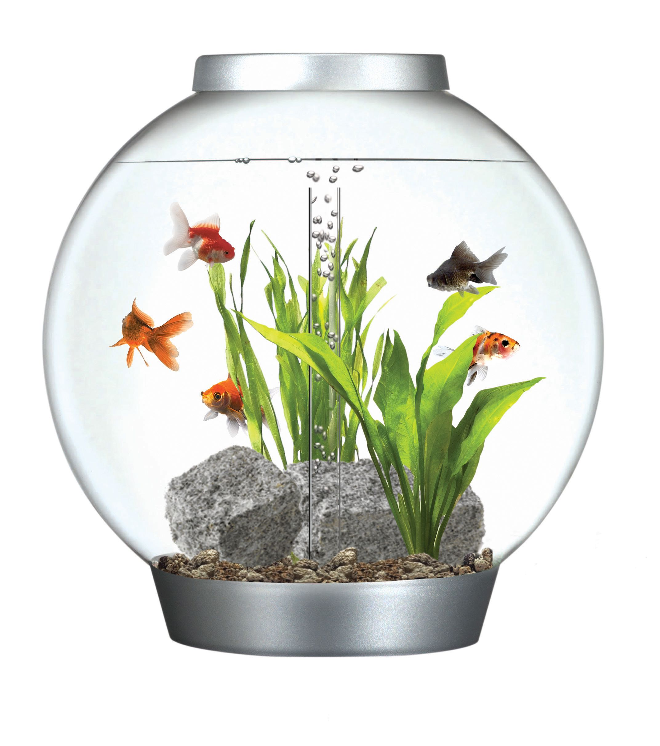 I Have Always Wanted One Of These Fish Tank Orbs So Sleek And Modern I Love It Fish Tank Biorb Planted Aquarium