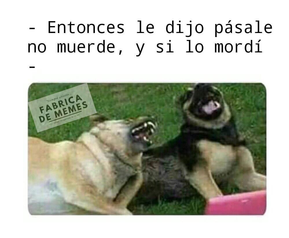 Pin De Adrisequera En Doggies Humor De Perros Perro Riendo Memes Divertidos