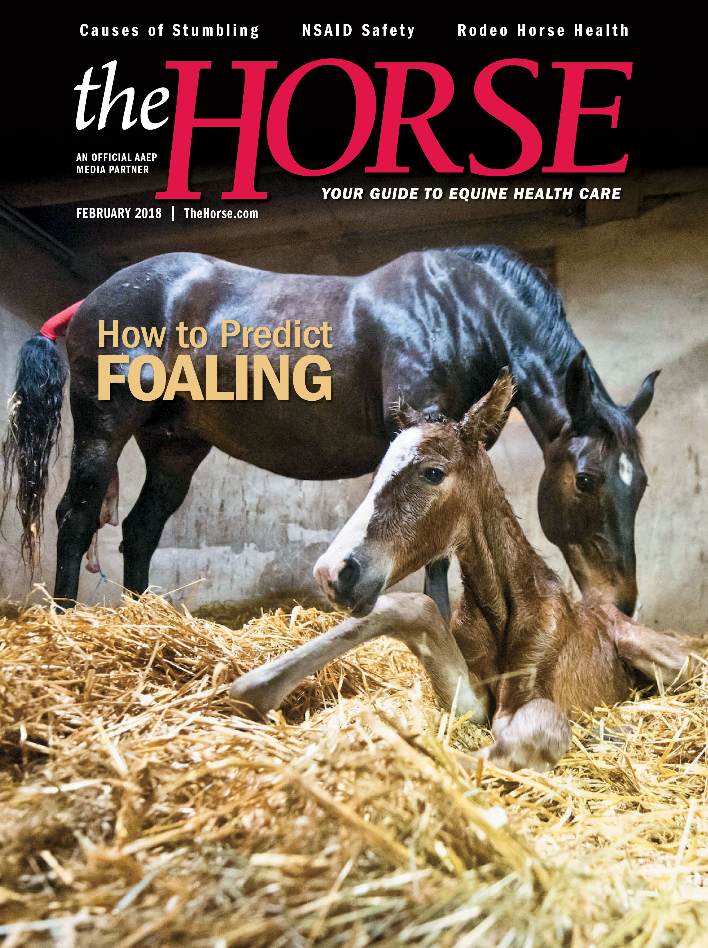 The Horse Your Guide To Equine Health Care Horse Health Horses Equines