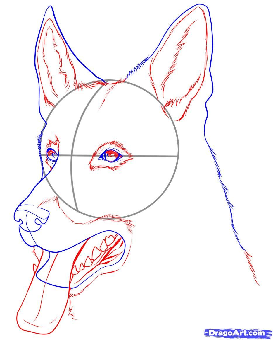 images for easy sketches of german shepherd dogs