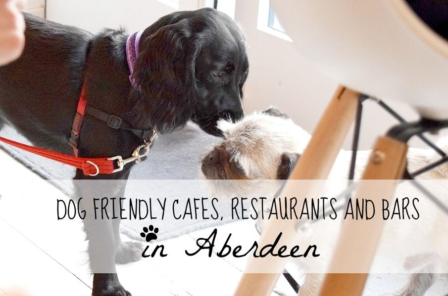 Dog Friendly Places To Visit In Aberdeen Scotland Dog Friendly Pubs In Aberdeen Dog Friendly Restaurants In Aberdeen Dog Friends Dogs Friendly