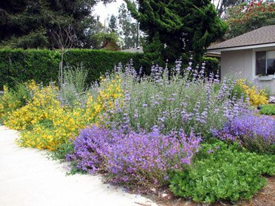 Image result for california native gardens - Image Result For California Native Gardens Drought Gardens