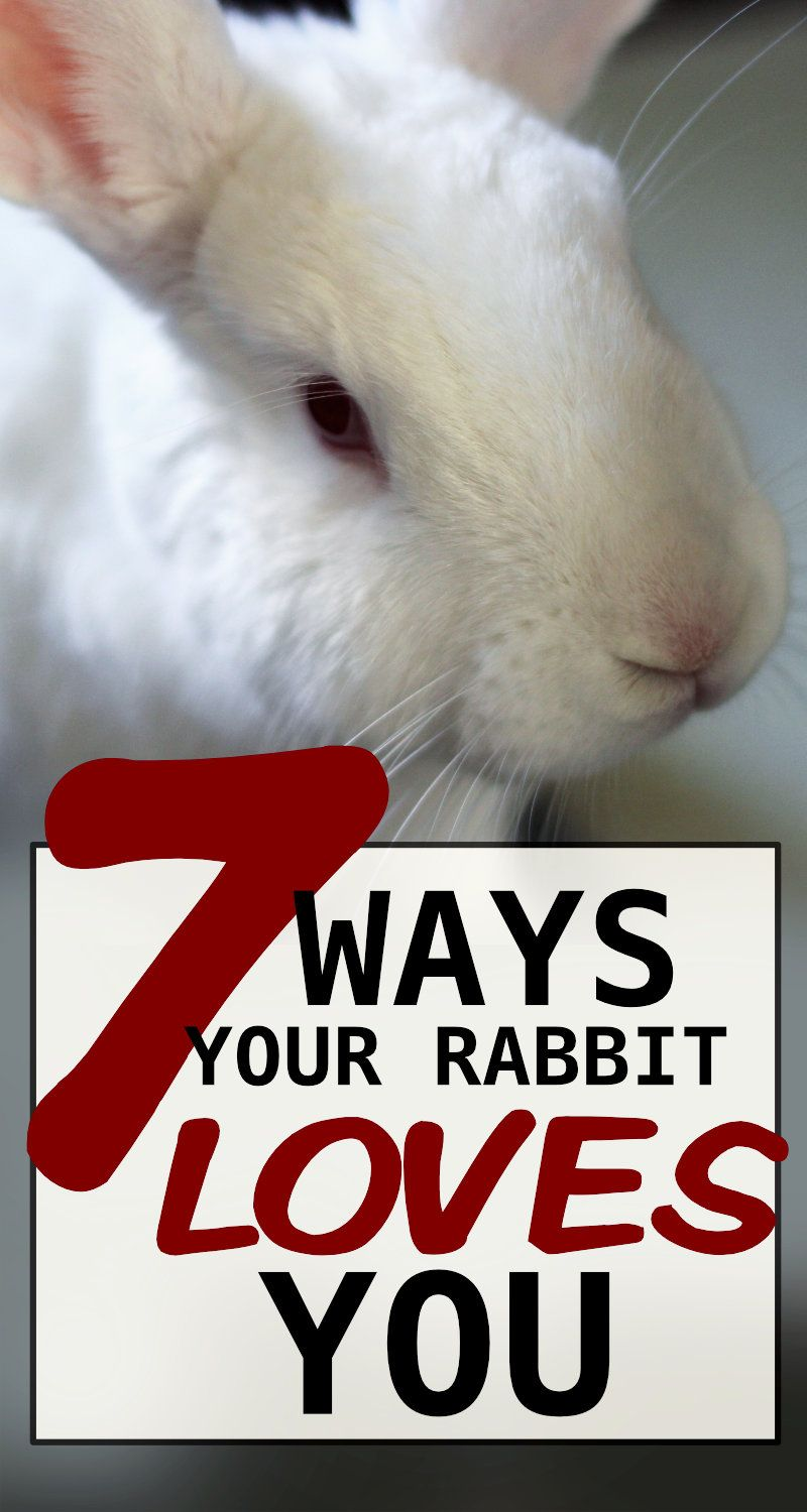 7 Ways To Know Your Rabbit Loves You In 2020 Pet Bunny Rabbits Pet Rabbit Care Rabbit