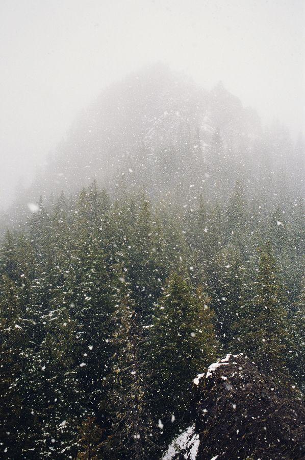 Photo of en el bosque: primera parte