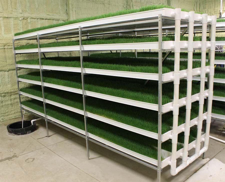 Growing Hydroponic Fodder Hydroponics 101 Hydroponic