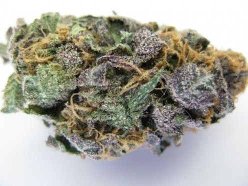 Purple Avalanche .... love me some purps