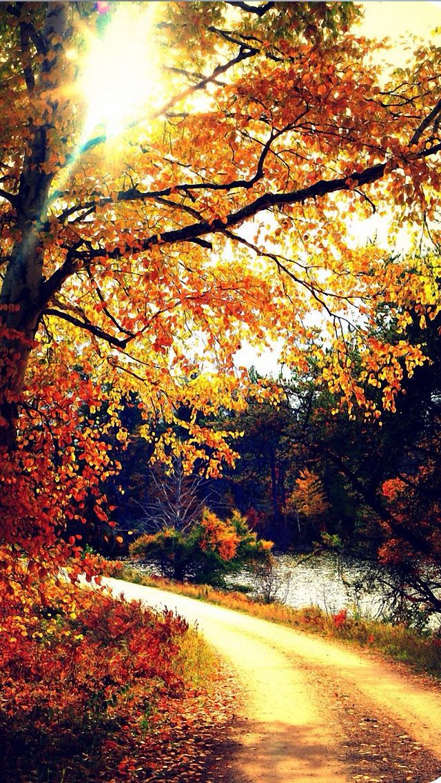 Autumn iPhone 5 wallpaper