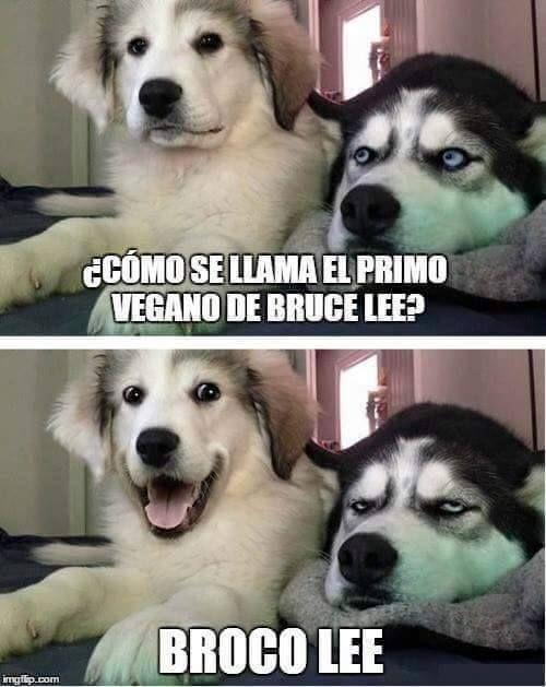 Chiste Vegano Humor De Perros Memes Graciosos Memes Divertidos