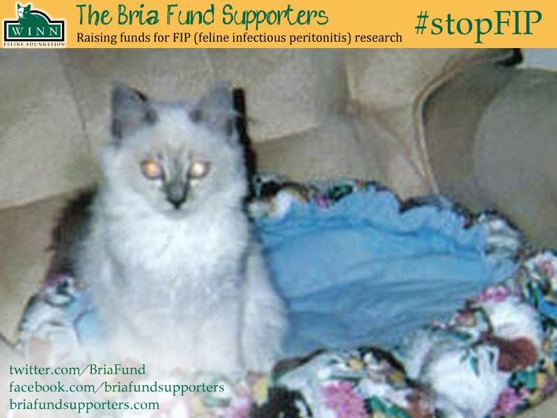 Bria fund supporters for fip research cats family pet