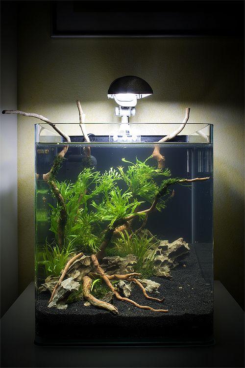 click this image to show the full size version aquarium art