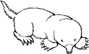 Mole Coloring Pages Mole Is Another Name For Mice When Viewed This Animal Is Strange Because Its Red Animal Coloring Pages Coloring Pages Coloring Pictures