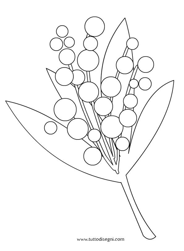 Mimosa Da Colorare.Festa Della Donna Mimosa Da Colorare Tuttodisegni Com