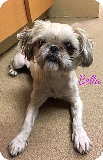 New Jersey Nj Shih Tzu Mix Meet Jackson Nj Bella A Puppy