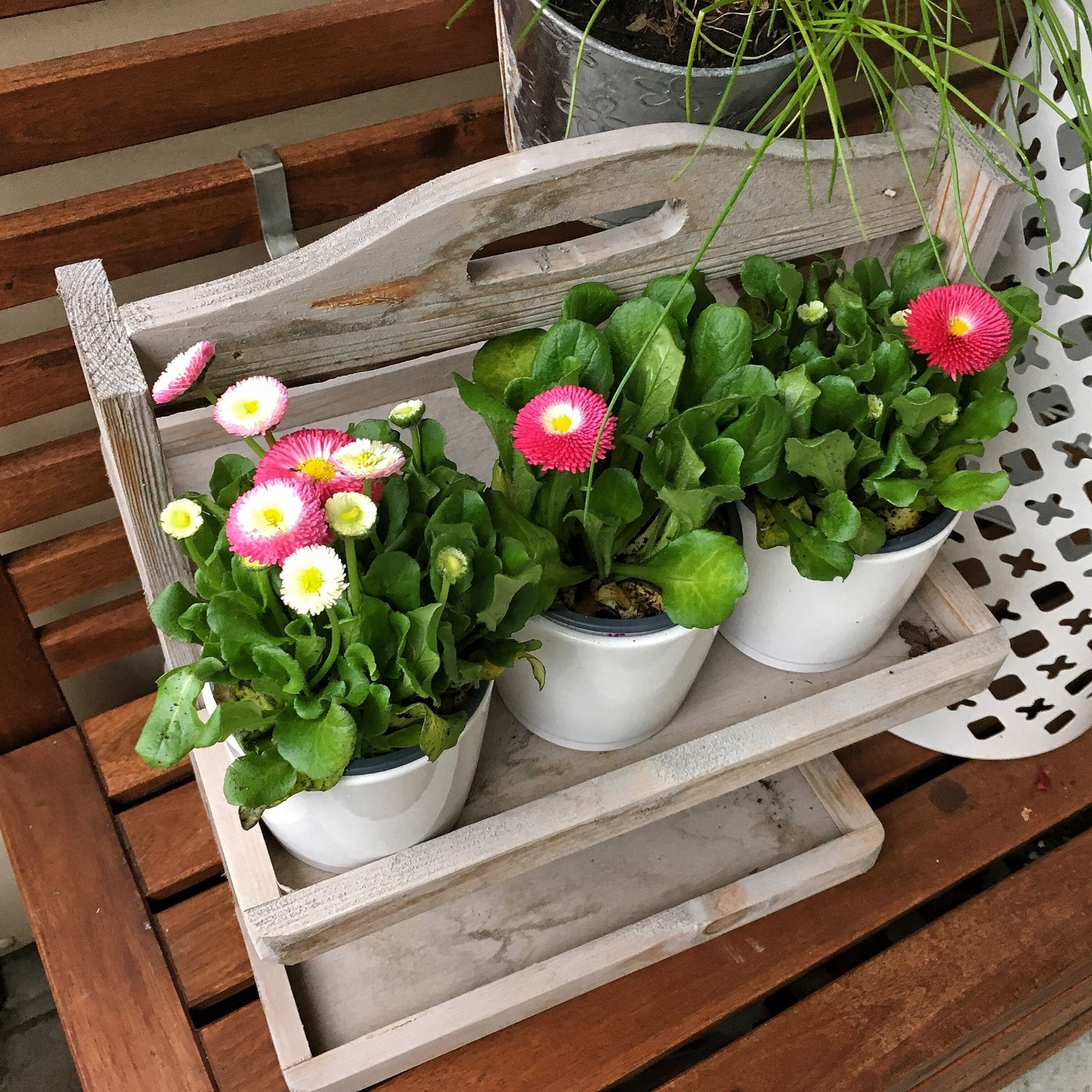 Die ersten Pflanzen ziehen auf dem Balkon ein tagfire photooftheday amazing