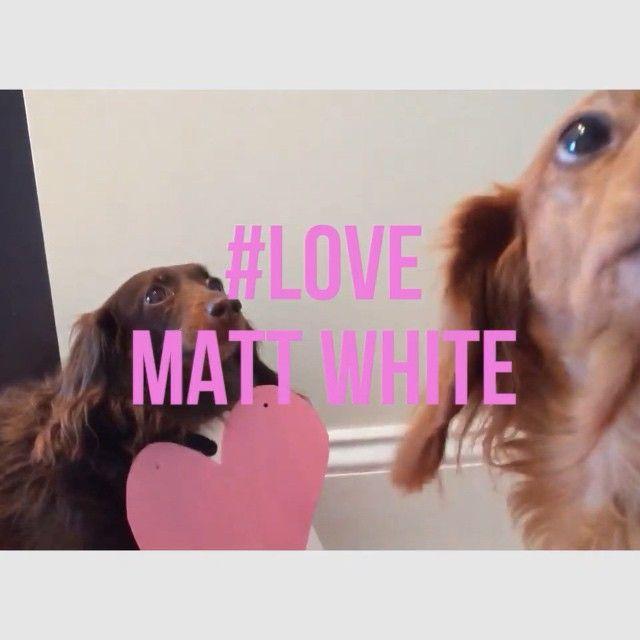 #PuppyLove #MattWhite #Love https://itunes.apple.com/us/album/love-single/id966999192