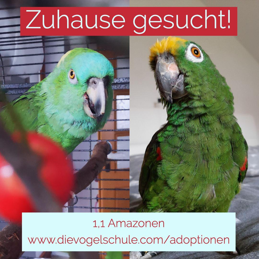 Papageien Abzugeben Adoptieren Statt Kaufen Fur Papageien
