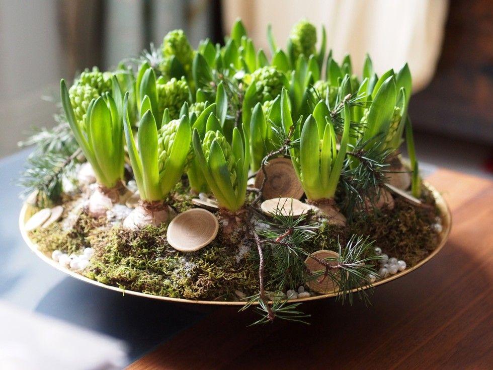 Christmas flowers- hyacinth bulbs, moss, wood discs...fabulous!