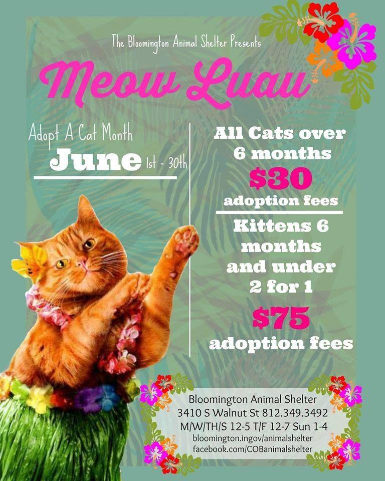Bloomington Animal Shelter Adoption Poster Animal Rescue