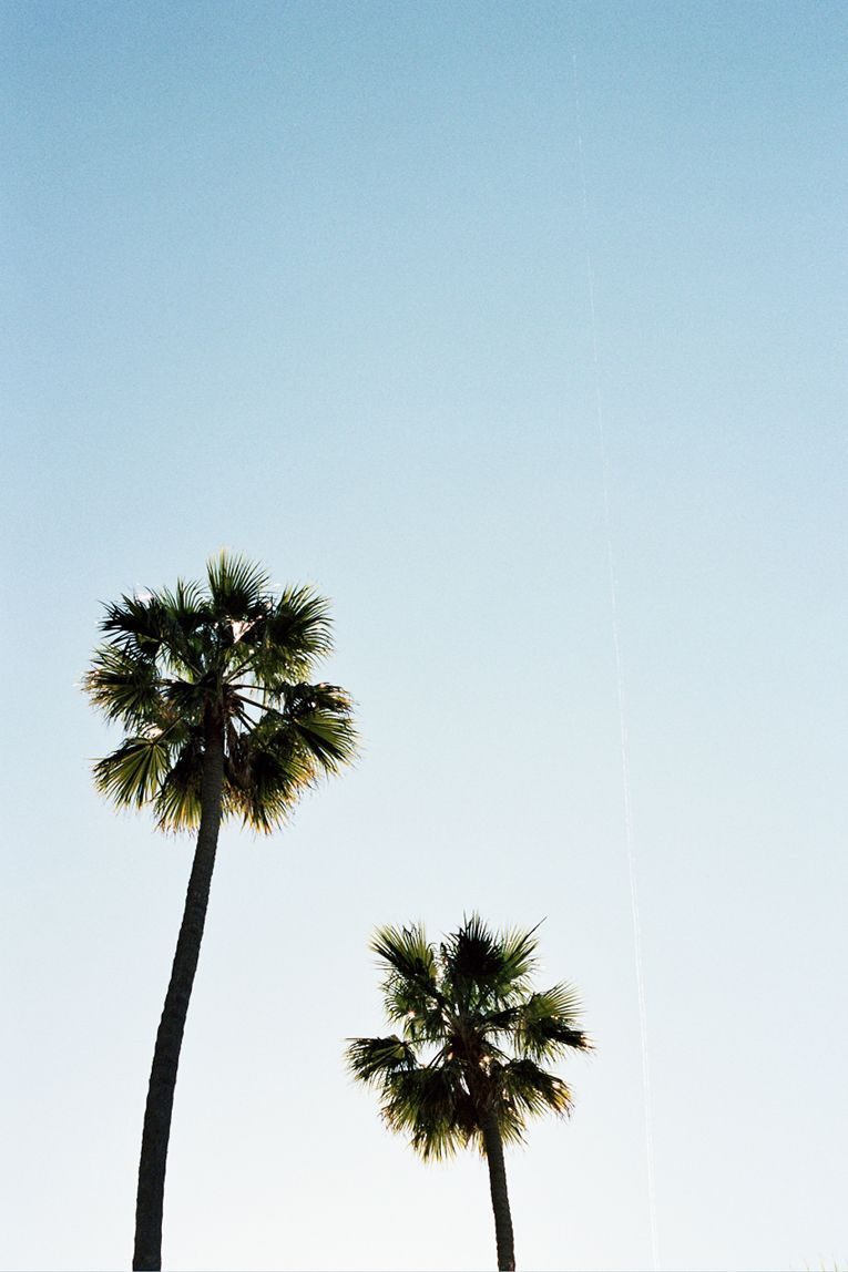 palm trees  www withlovefromkat com is part of Palm tree iphone wallpaper -